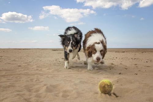 Whose Ball?