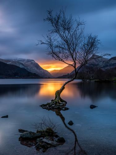 Lone Tree and Sunbeams
