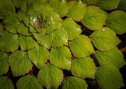 Floating Plant