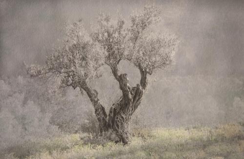 Lone Olive