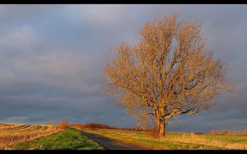 TreeLit Up In Setting Sun
