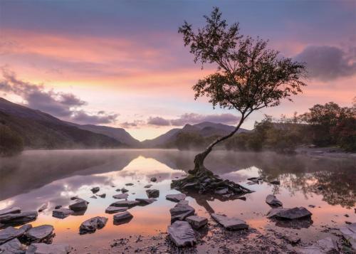 Lone Tree Llanberis