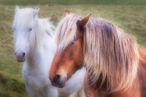 Ponies, Barra