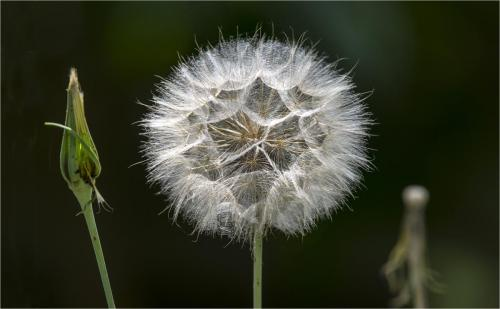The Life of a Seed Head