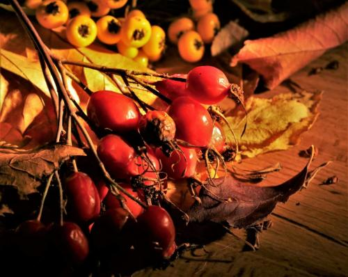 Debbie Hall_Autumn Berries