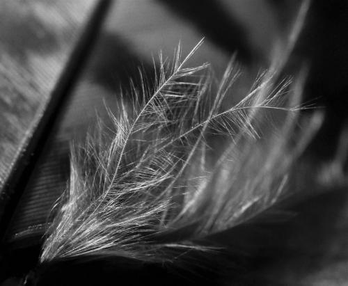 Debbie Hall_Base of a Feather