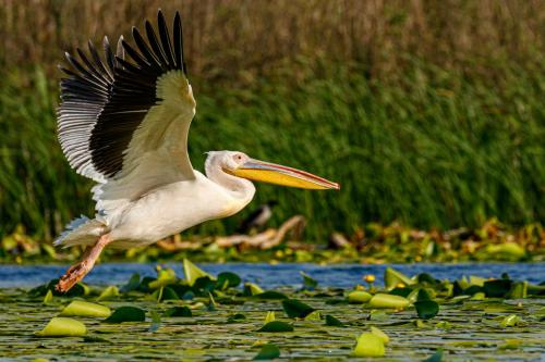 Wildlife of the Danube Delta
