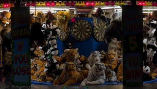 Ian Montgomery_Eye of the tiger_1