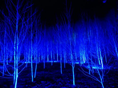 Kim Human_Blue Trees of Anglesey Abbey