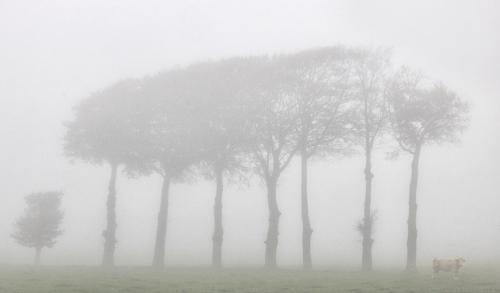 Foggy Day on the Farm