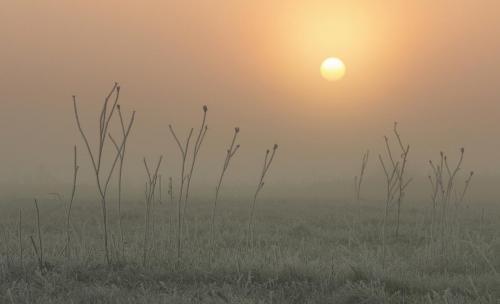 St Ives_Fog, Frost, Sunrise