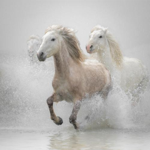 Leading the Gallop
